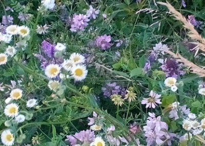 Meadow flower years after